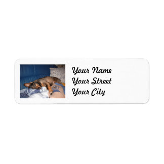 Dog on cozy couch label
