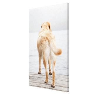 Dog on dock canvas print