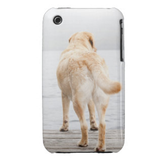 Dog on dock iPhone 3 cover