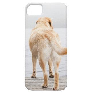 Dog on dock iPhone SE/5/5s case