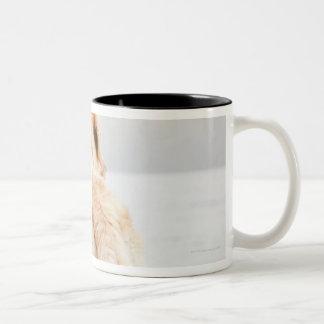 Dog on dock Two-Tone coffee mug