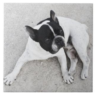 Dog on gravel ceramic tile
