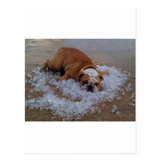 dog on ice, Dam I'm Hot Postcard