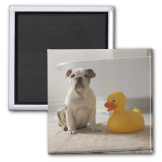 Dog on mat with plastic duck magnet