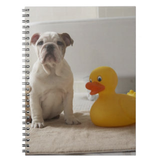 Dog on mat with plastic duck notebook