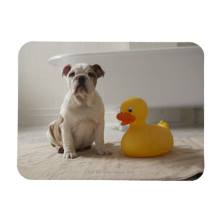 Dog on mat with plastic duck rectangular photo magnet