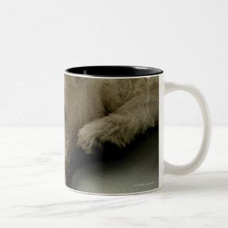 Dog on office chair Two-Tone coffee mug