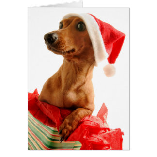 Dog on present with Santa hat Card