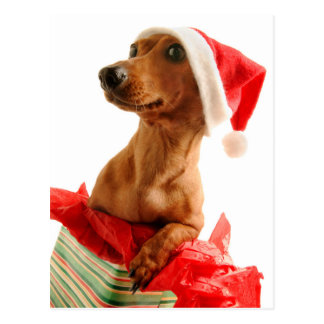 Dog on present with Santa hat Postcard