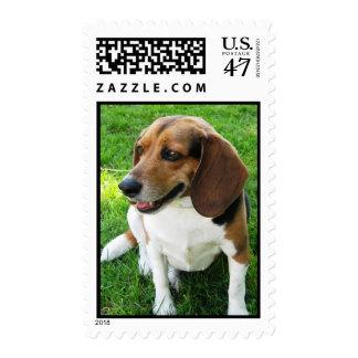 Dog on Stamp