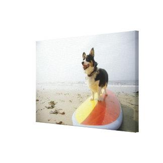 Dog on surfboard canvas print