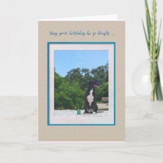 Dog On The Beach Birthday Card