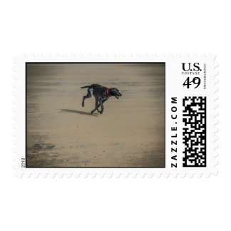 Dog On The Beach Postage Stamp