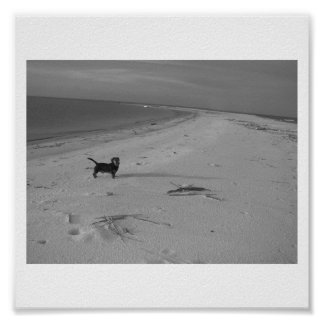 Dog on the Beach Poster