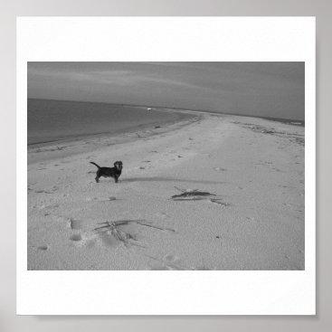 Beach Themed Dog on the Beach Poster