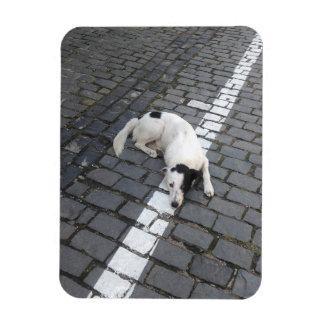 Dog On The Line Magnet