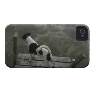 Dog on Top of Roof iPhone 4 Case-Mate Case