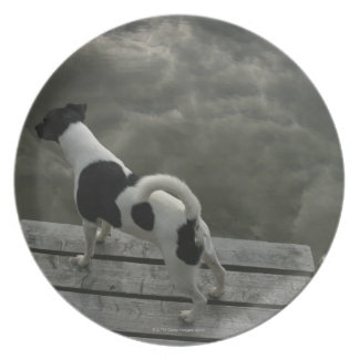 Dog on Top of Roof Melamine Plate