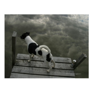 Dog on Top of Roof Postcards