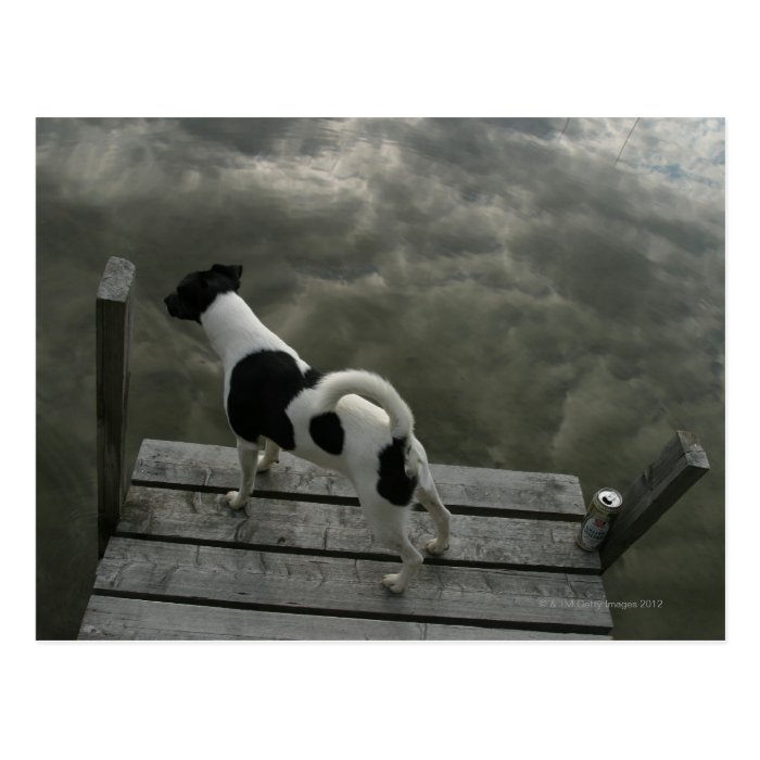 Dog on Top of Roof Postcard