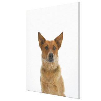 Dog on White 01 Canvas Print