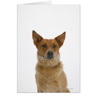 Dog on White 01 Card
