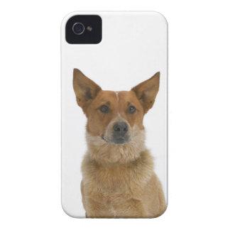 Dog on White 01 iPhone 4 Case
