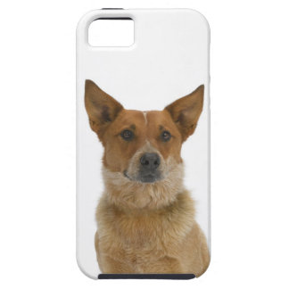 Dog on White 01 iPhone SE/5/5s Case