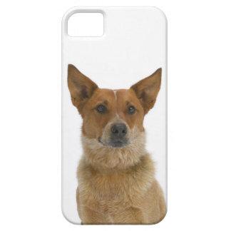 Dog on White 01 iPhone SE/5/5s Case