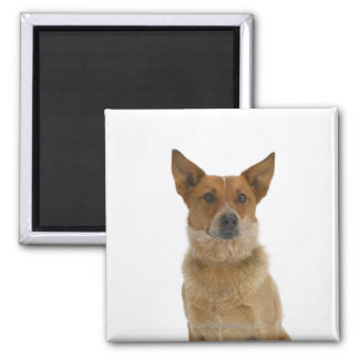 Dog on White 01 Magnet