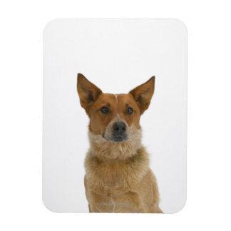 Dog on White 01 Magnet