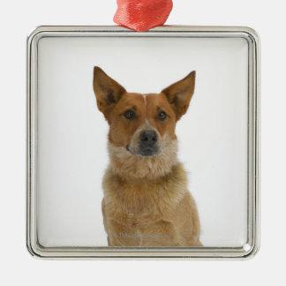 Dog on White 01 Metal Ornament