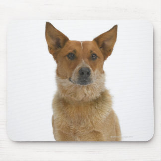 Dog on White 01 Mouse Pad