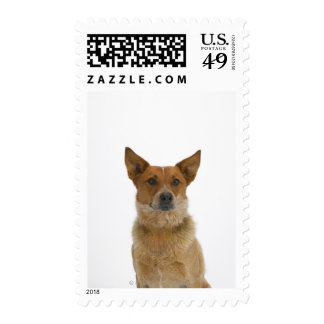 Dog on White 01 Postage