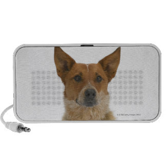 Dog on White 01 PC Speakers