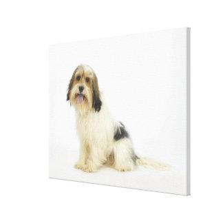 Dog on White 104 Canvas Print