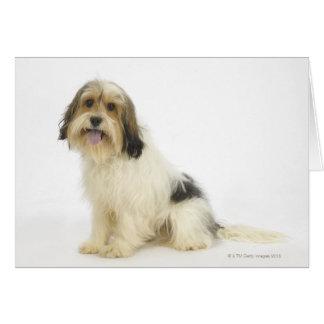 Dog on White 104 Card