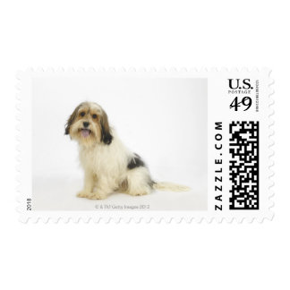 Dog on White 104 Postage
