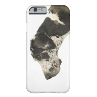 Dog on White 11 Barely There iPhone 6 Case