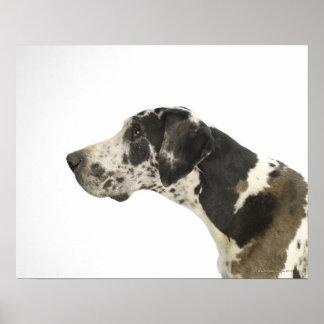 Dog on White 11 Poster