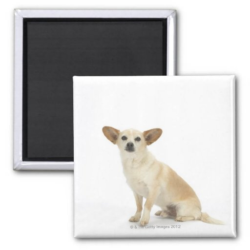 Dog on White 13 2 Inch Square Magnet