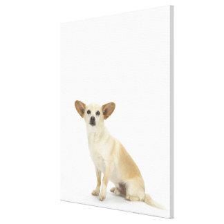 Dog on White 13 Canvas Print