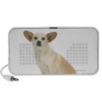 Dog on White 13 Speaker