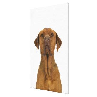 Dog on White 38 Canvas Print