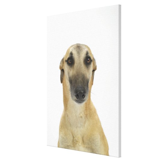 Dog on White 41 Canvas Print
