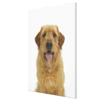 Dog on White 44 Canvas Print