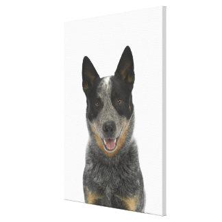 Dog on White 5 Canvas Print