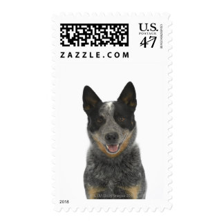 Dog on White 5 Postage
