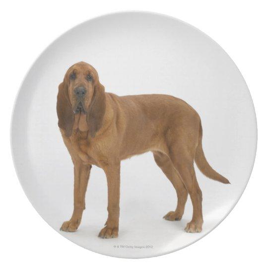 Dog on White 97 Melamine Plate