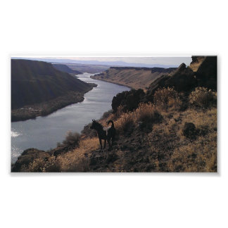 Dog overlooking canyon river high rise scenic view photographic print